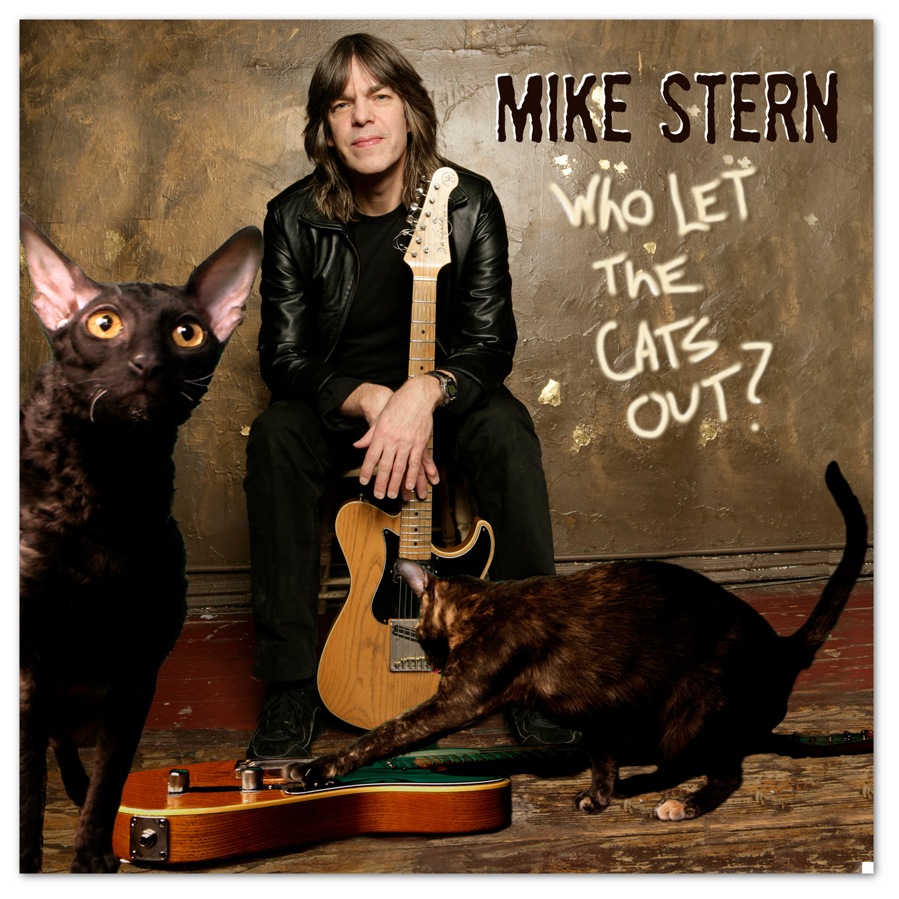 Who let the cats out? - Mike Stern