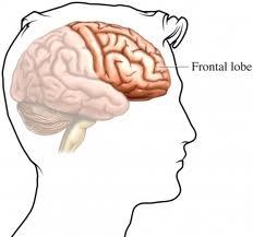 Lòbuls frontals