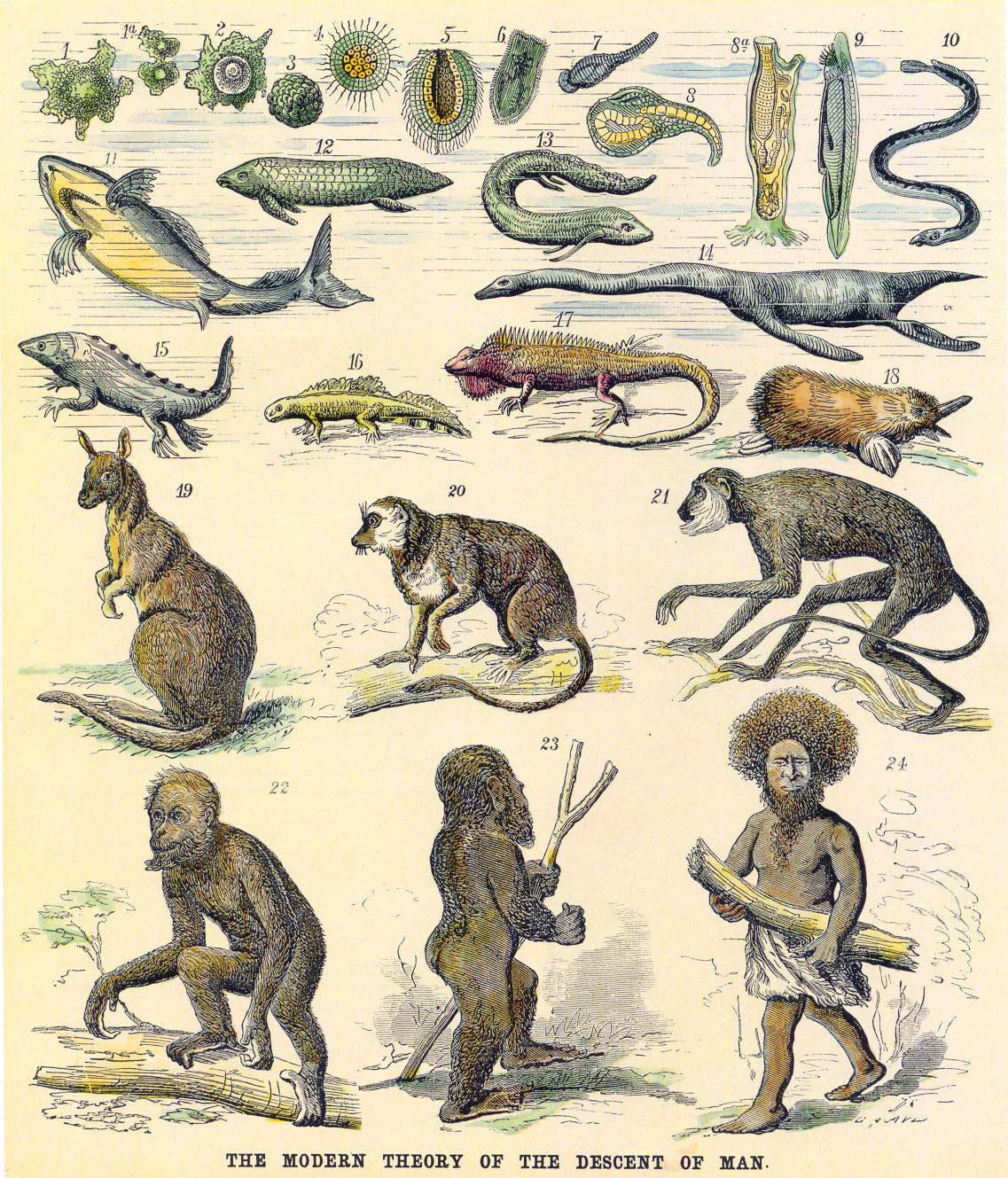 Los retos actuales del darwinismo - Juan Moreno