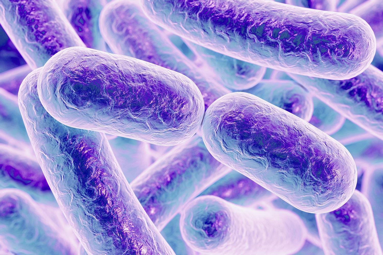 Rod shaped bacteria