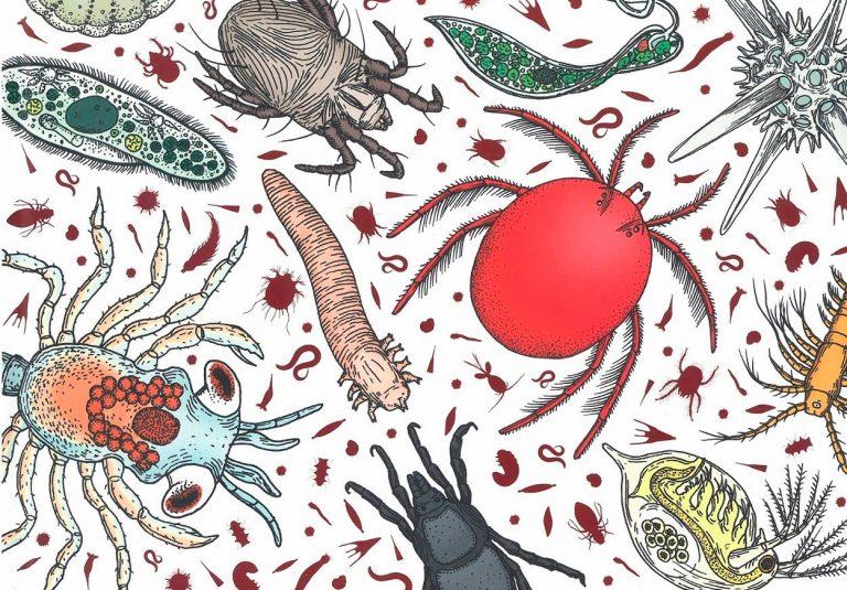 Los mundos invisibles de los animales microscópicos RAJCAK, Hélène