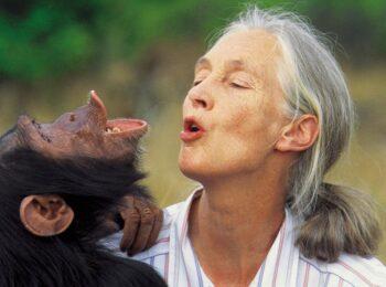 Jane Goodall: 86 anys d'una primatòloga revolucionària
