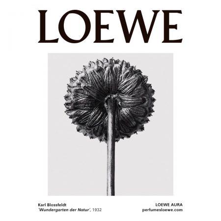 Loewe_Blossfeldt-01